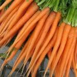 carottes primeur