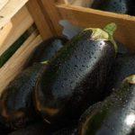 Recette avec aubergine