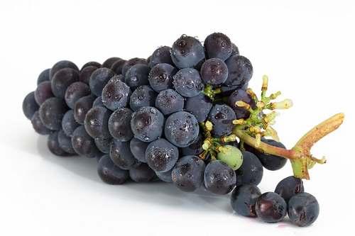 Le resvératrol du raisin noir