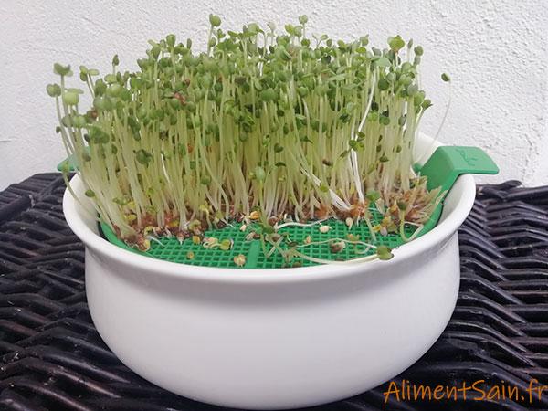 Coupelle de germination Germline